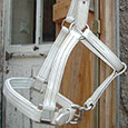Licol cuir blanc cheval de trait